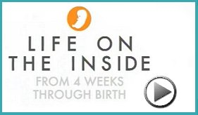 Life on the Inside - 4 Weeks to Birth